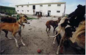 Crowded conditions prevail at the rescue shelter.