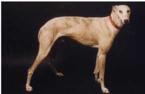 Silver later in the care of the Bosch family in Switzerland.