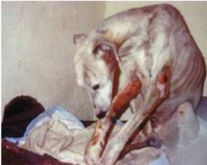 This galgo, called Silver, was found in 1996 by Anne in a refuge in Granada