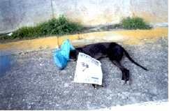 Dead galga at side of road