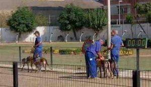 Meridiana Greyhound track