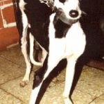 Brought into Scooby from South Madrid. Grossly malformed legs due to malnutrition on dam as well as pup.